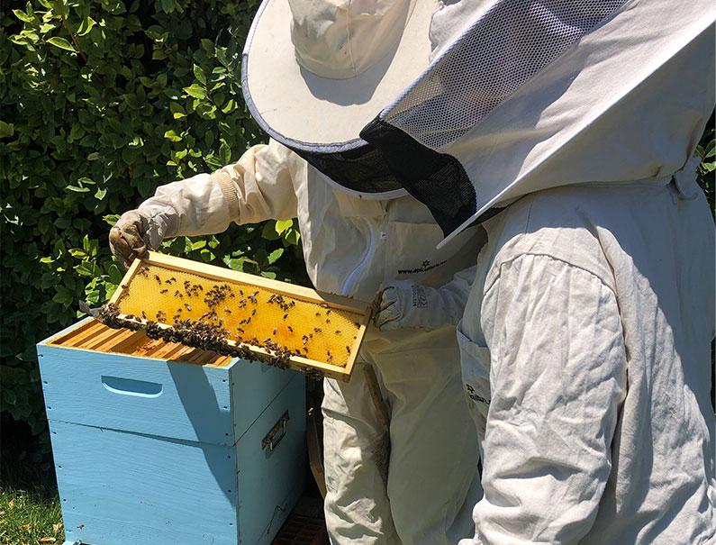 Des abeilles chez FDS