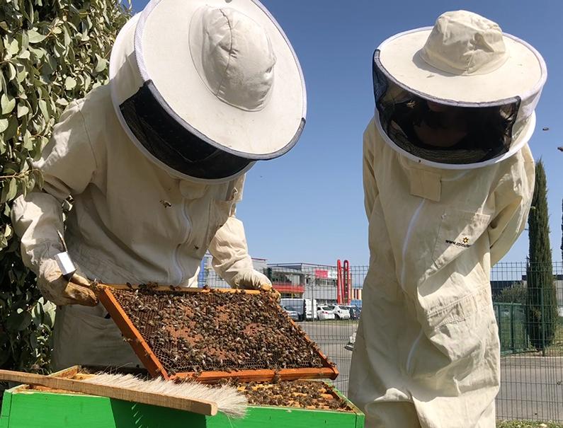 20 mai : journée mondiale des abeilles
